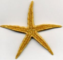 ALP115starfish-natural-beigelarge